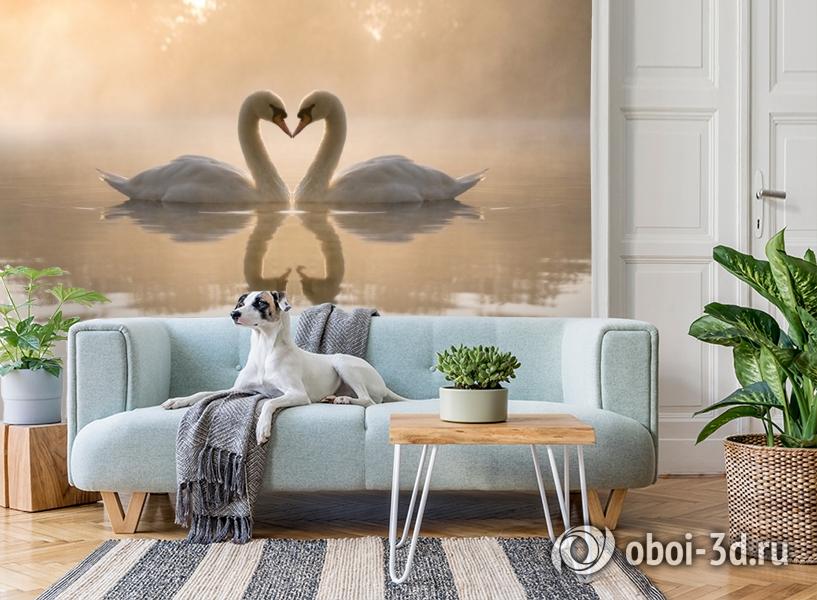3D Фотообои «Влюбленные лебеди» вид 2