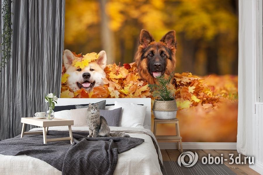 3D Фотообои  «Собаки в листьях»  вид 7