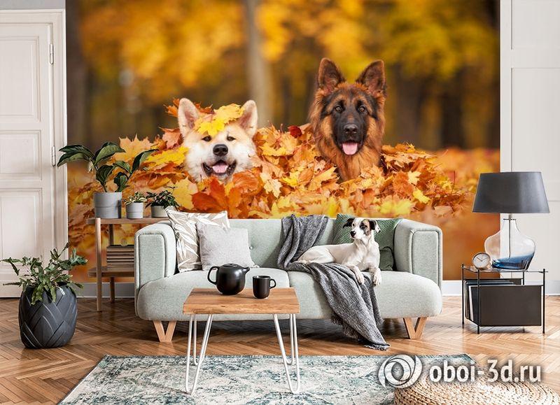 3D Фотообои  «Собаки в листьях»  вид 6