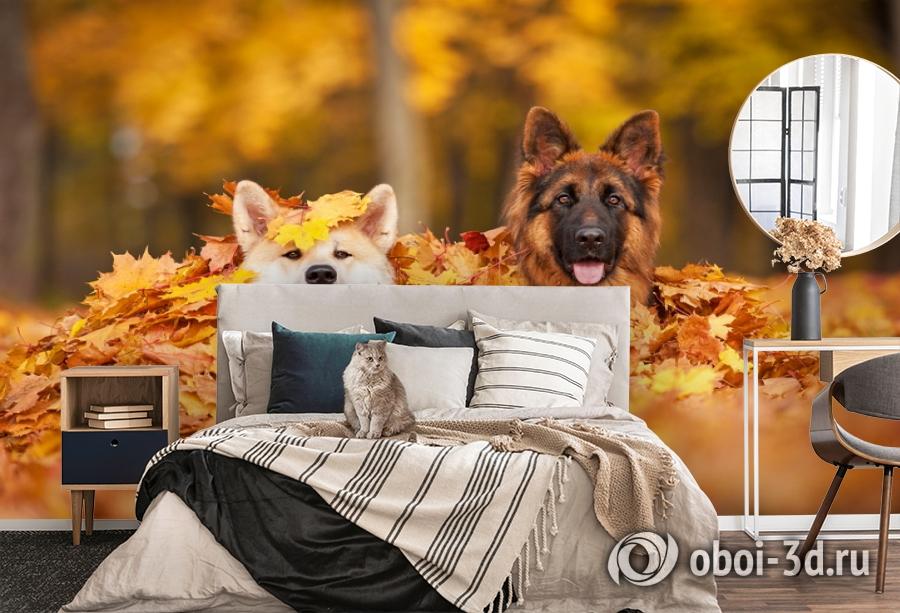 3D Фотообои  «Собаки в листьях»  вид 5