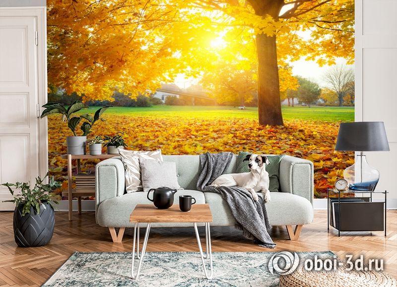 3D Фотообои  «Осенний парк»  вид 7