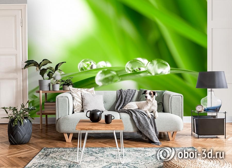 3D Фотообои  «Трава с росой»  вид 8