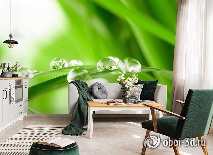 3D Фотообои  «Трава с росой»  вид 7