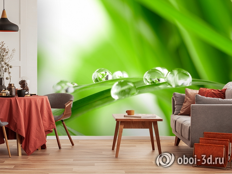 3D Фотообои  «Трава с росой»  вид 5
