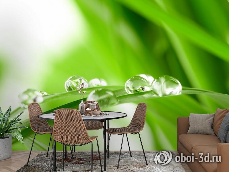 3D Фотообои  «Трава с росой»  вид 2