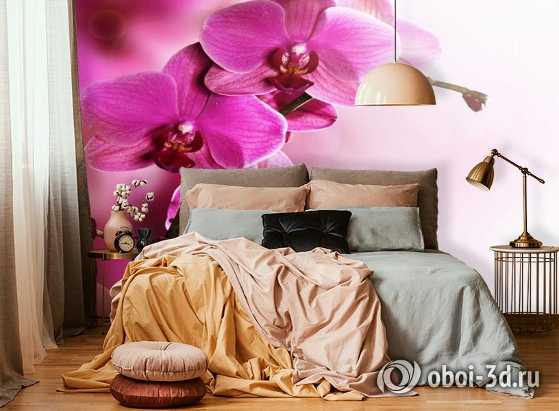 3D Фотообои «Розовая орхидея на нежном фоне» вид 6