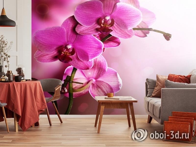 3D Фотообои «Розовая орхидея на нежном фоне» вид 5