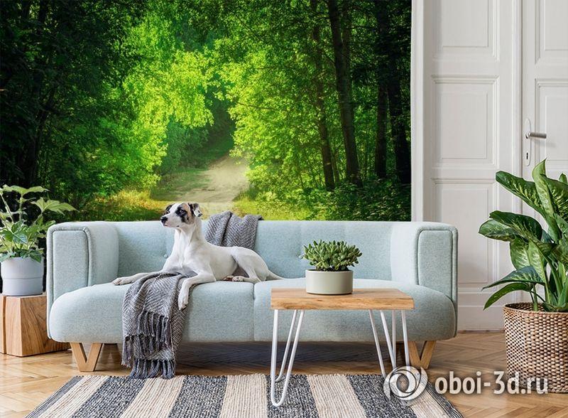 3D Фотообои  «Тропинка в зеленом лесу»  вид 2