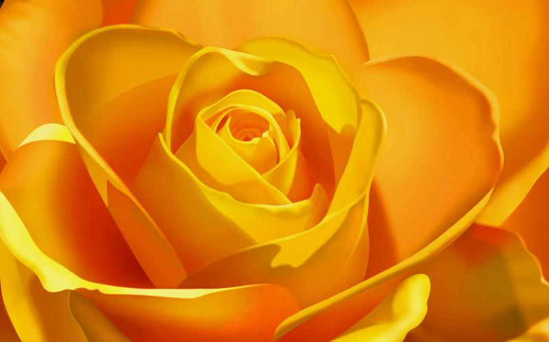 3D Фотообои 3D Фотообои  «Желтая роза»