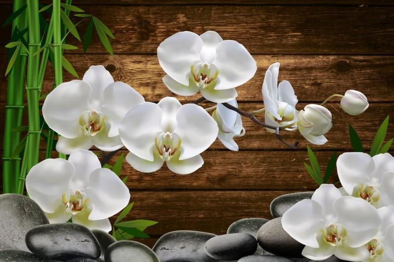 правильно фото на стекле ветки орхидеи они небольшие