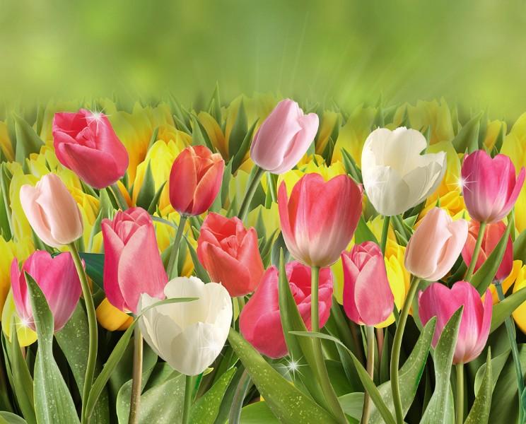 3D Фотообои 3D Фотообои  «Тюльпаны с каплями росы»