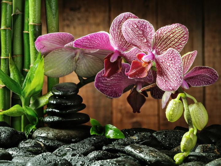 3D Фотообои 3D Фотообои  «Орхидея на камне»