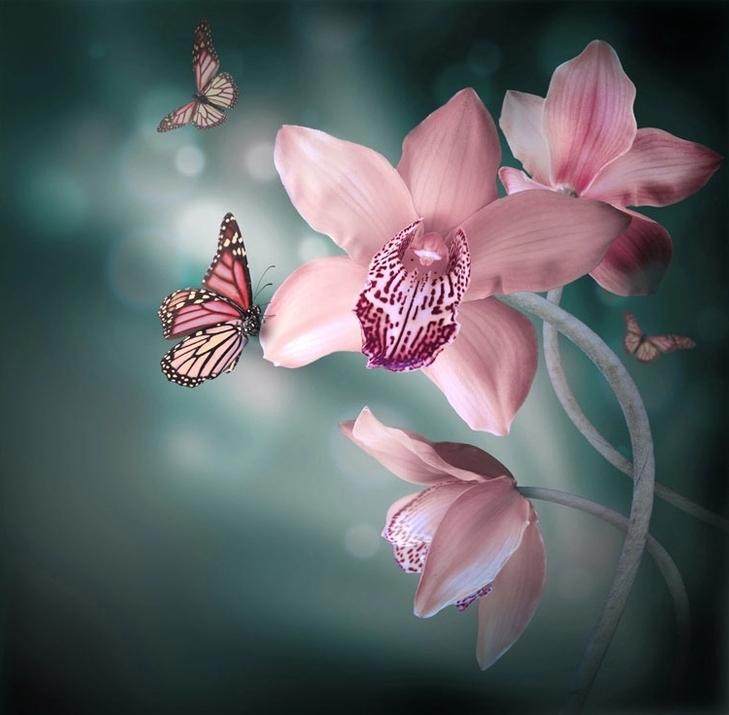 3D Фотообои 3D Фотообои «Изящная орхидея»