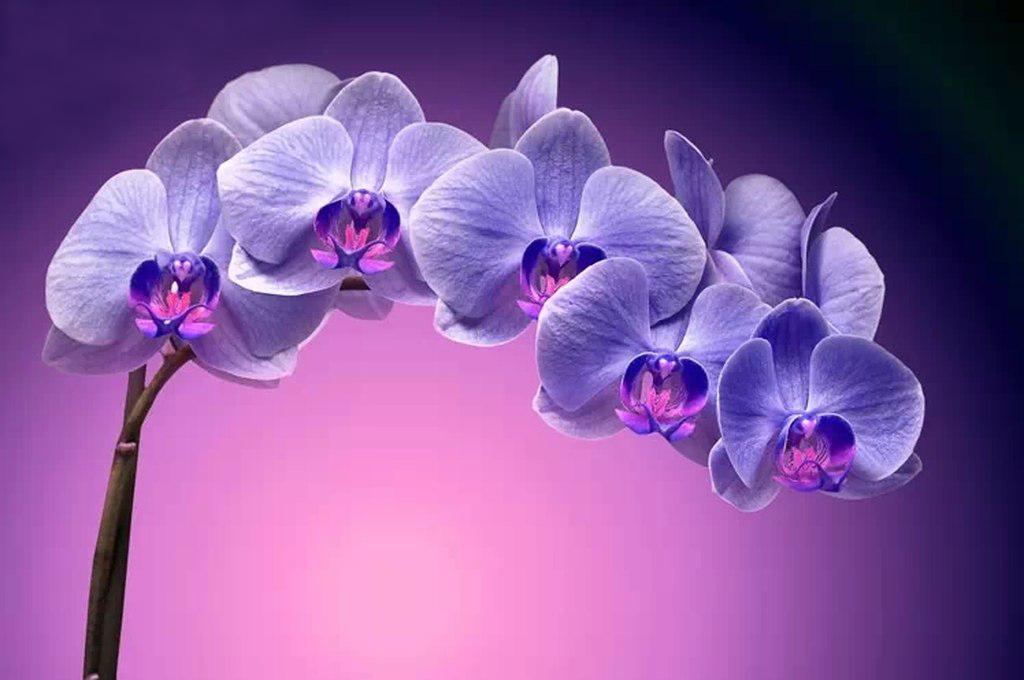 3D Фотообои 3D Фотообои «Фиолетовая орхидея»