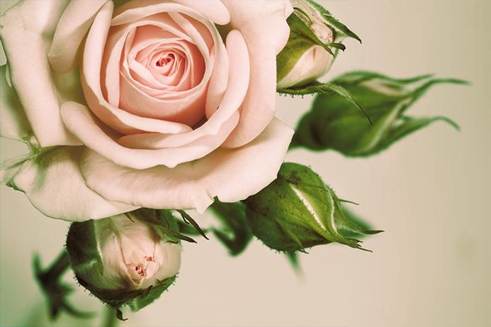 3D Фотообои 3D Фотообои «Роза»