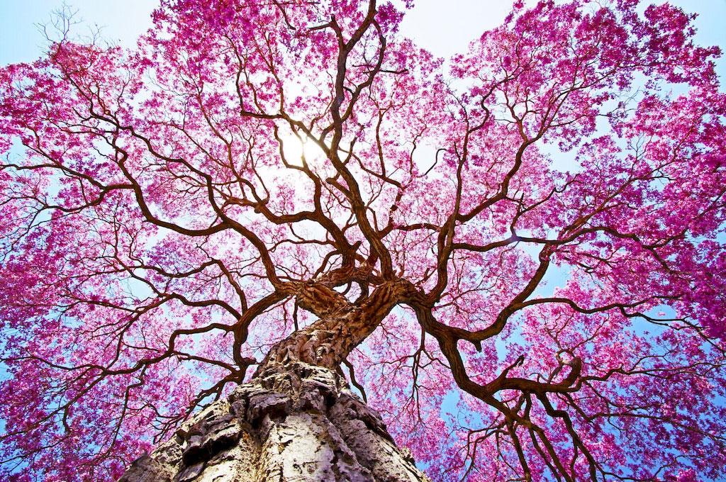 3D Фотообои 3D Фотообои  «Цветущее дерево»