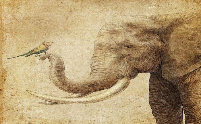3D Фотообои 3D Фотообои «Слон и птичка»