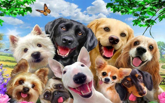 3D Фотообои 3D Фотообои «Улыбающиеся собачки»