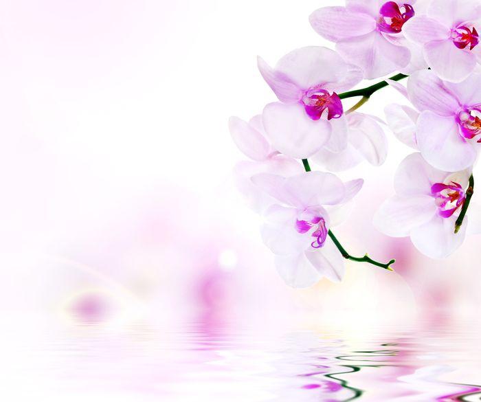 3D Фотообои «Нежные орхидеи над водой»