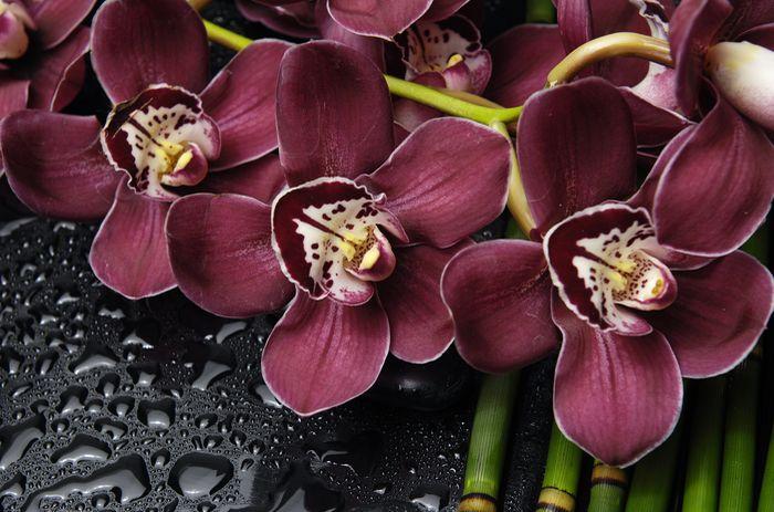 3D Фотообои «Орхидеи и капли воды»