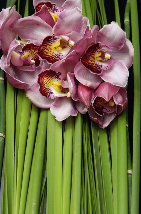 3D Фотообои «Красивые орхидеи»