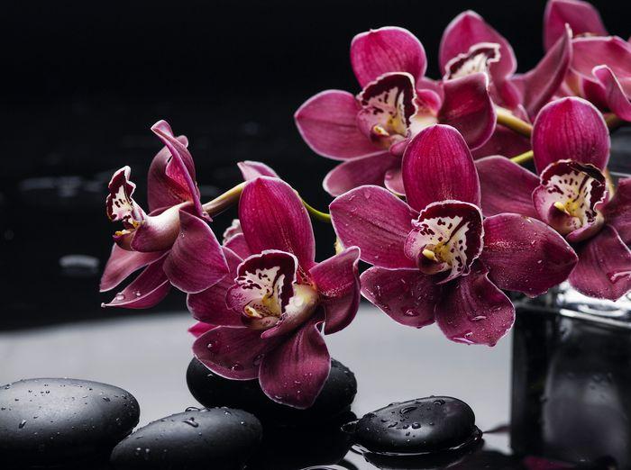3D Фотообои «Бордовые орхидеи»