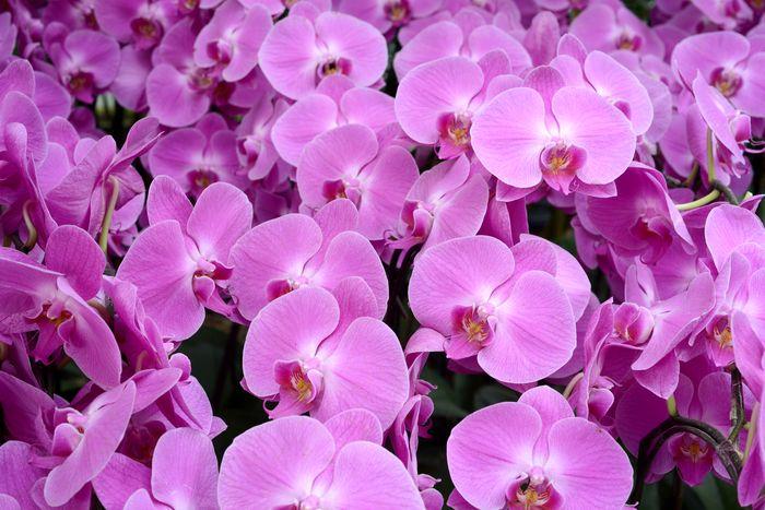 3D Фотообои «Ковер из орхидей»