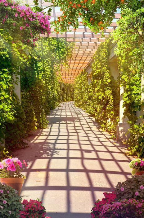 3D Фотообои 3D Фотообои «Лабиринт в виноградной долине»