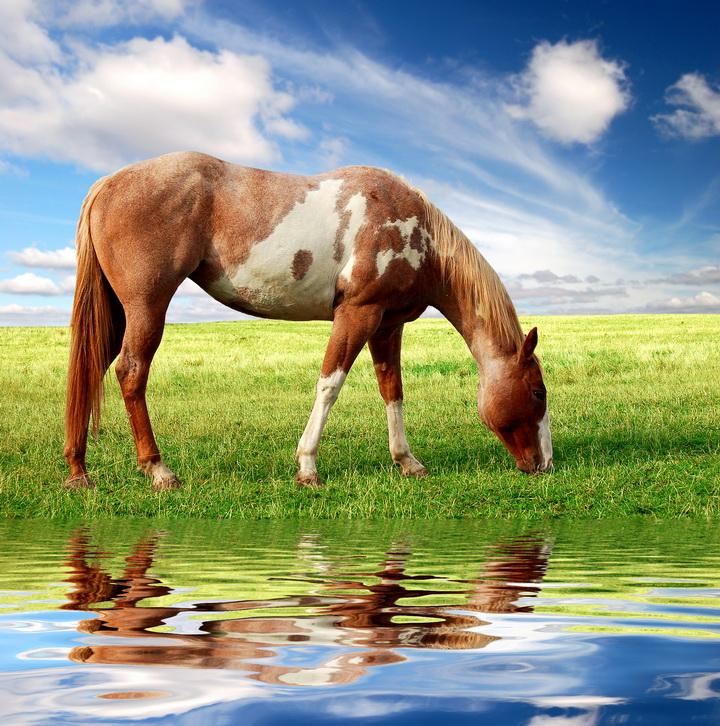 3D Фотообои 3D Фотообои  «Лошадь на лугу»