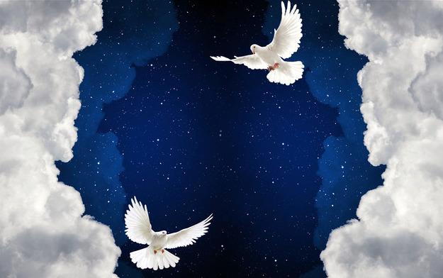 3D Фотообои 3D Фотообои  «Птицы в ночном небе»