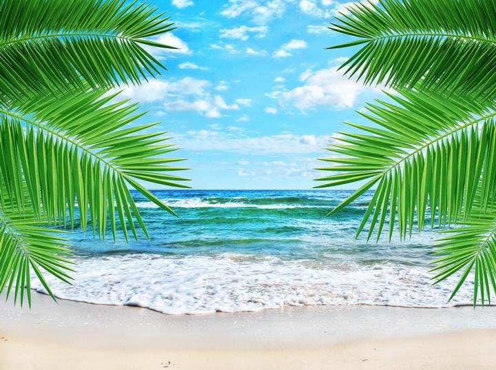 3D Фотообои «Ветви пальмы»