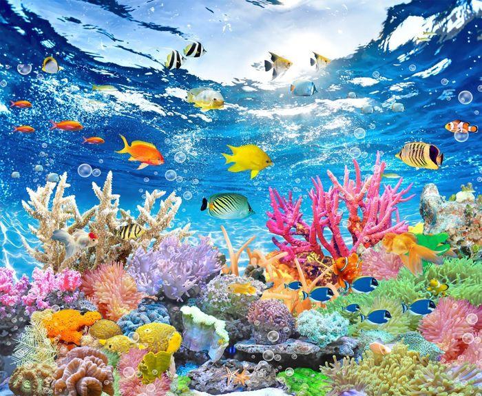 3D Фотообои 3D Фотообои «Яркие краски кораллового рифа»