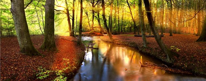 3D Фотообои 3D Фотообои  «Река в лесу»
