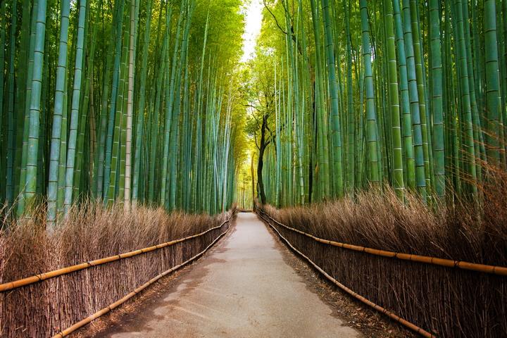 3D Фотообои 3D Фотообои «Бамбуковый лес»