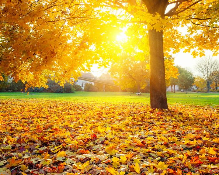 3D Фотообои 3D Фотообои  «Осенний парк»