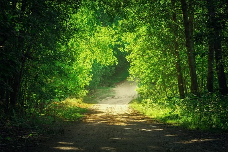 3D Фотообои 3D Фотообои  «Тропинка в зеленом лесу»