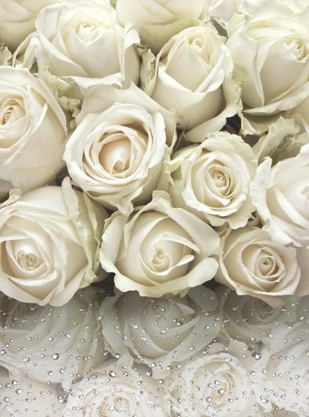 3D Фотообои «Белые розы на стекле» 178х240