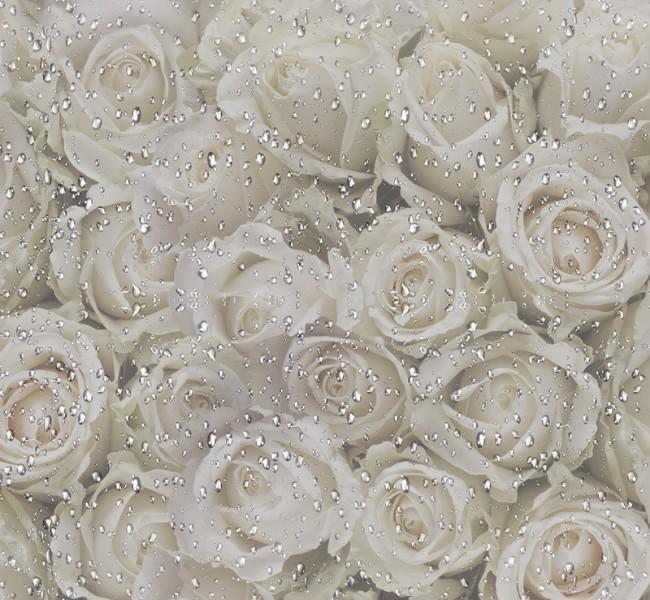3D Фотообои «Белые розы на стекле» 260х240