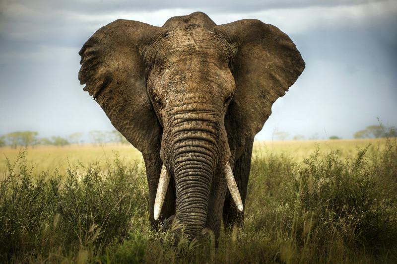 3D Фотообои «Слон»