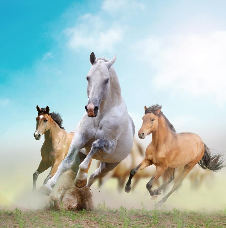 3D Фотообои 3D Фотообои «Лошади в дикой природе»